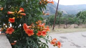Beautiful Region Almora